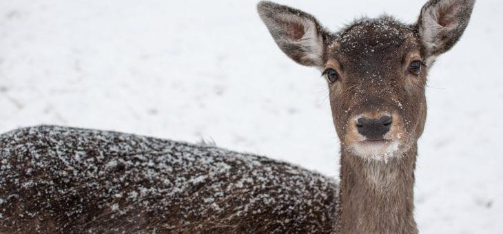Jakt och viltvård